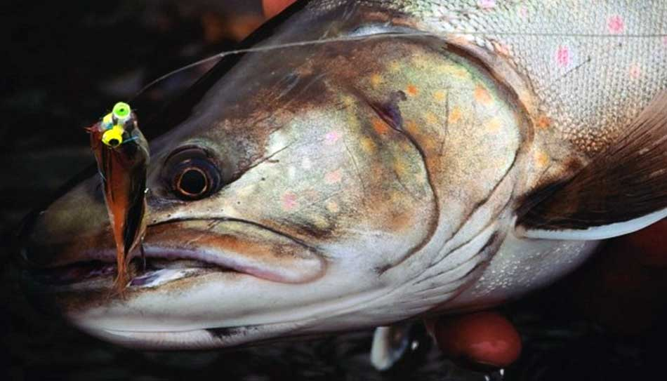5 hour half day guided fishing trips whistler vancouver for Half day fishing trips